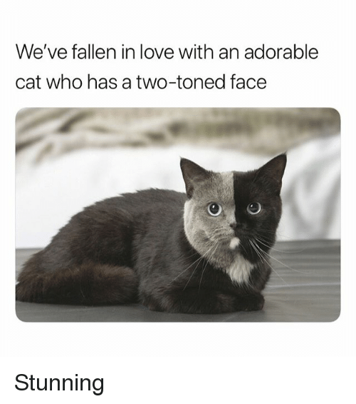 Toned: We've fallen in love with an adorable  cat who has a two-toned face Stunning