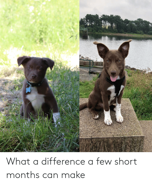 Can, Make, and What: What a difference a few short months can make