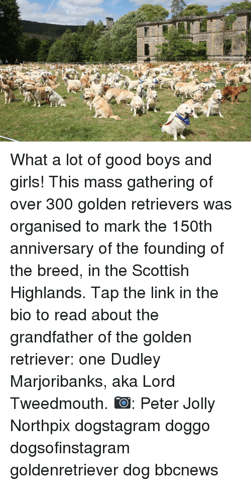 Girls, Memes, and Golden Retriever: What a lot of good boys and girls! This mass gathering of over 300 golden retrievers was organised to mark the 150th anniversary of the founding of the breed, in the Scottish Highlands. Tap the link in the bio to read about the grandfather of the golden retriever: one Dudley Marjoribanks, aka Lord Tweedmouth. 📷: Peter Jolly Northpix dogstagram doggo dogsofinstagram goldenretriever dog bbcnews