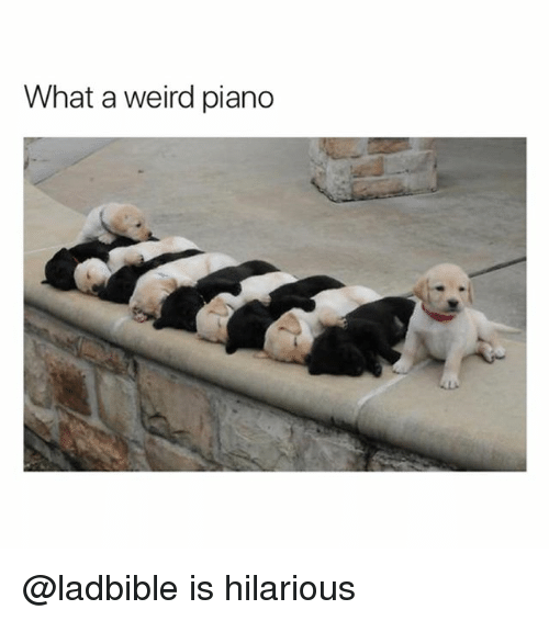Funny, Weird, and Piano: What a weird piano @ladbible is hilarious