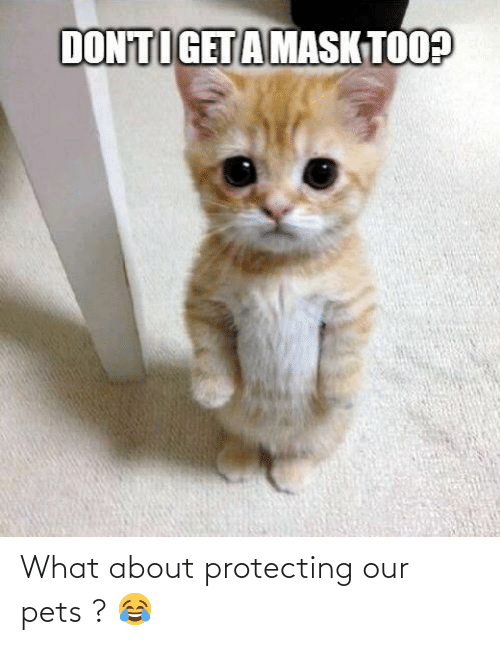 protecting: What about protecting our pets ? 😂