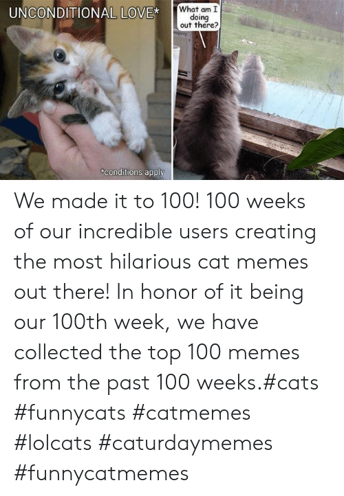 Cats, Love, and Memes: What am I  doing  out there?  UNCONDITIONAL LOVE*  conditions apply We made it to 100! 100 weeks of our incredible users creating the most hilarious cat memes out there! In honor of it being our 100th week, we have collected the top 100 memes from the past 100 weeks.#cats #funnycats #catmemes #lolcats #caturdaymemes #funnycatmemes
