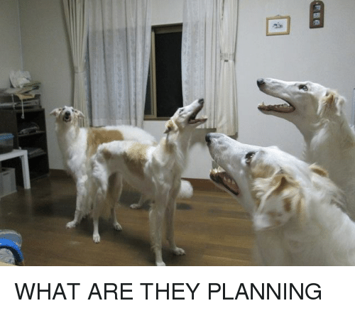 They, What, and What Are: WHAT ARE THEY PLANNING