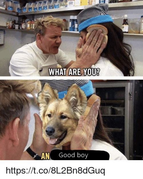 Memes, Good, and Boy: WHAT ARE YOU?  AN Good boy https://t.co/8L2Bn8dGuq