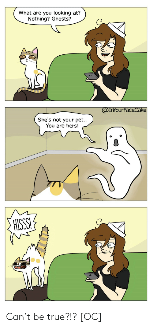Hers: What are you looking at?  Nothing? Ghosts?  @InYOur FaceCake  She's not your pet..  You are hers!  HISSS! Can't be true?!? [OC]