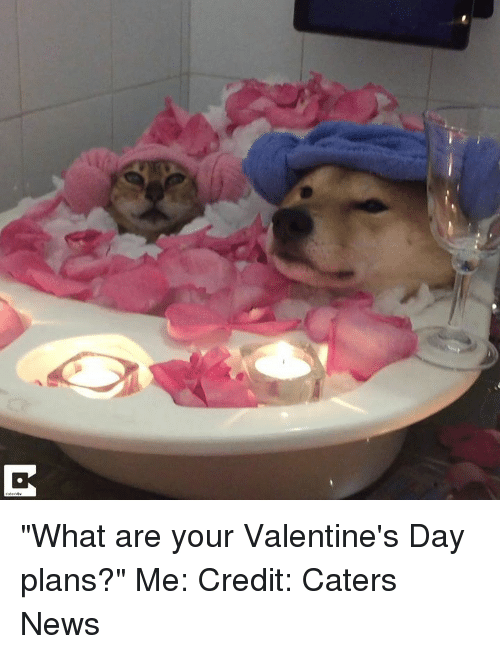 "News, Valentine's Day, and Day: ""What are your Valentine's Day plans?""  Me:   Credit: Caters News"