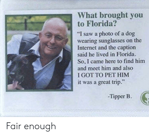 """Find Him: What brought you  to Florida?  """"I saw a photo of a dog  wearing sunglasses on the  Internet and the caption  said he lived in Florida.  So, I came here to find him  and meet him and also  I GOT TO PET HIM  it was a great trip.""""  -Tipper B. Fair enough"""