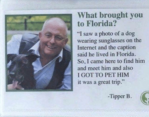 """Find Him: What brought you  to Florida?  """"I saw a photo of a dog  wearing sunglasses on the  Internet and the caption  said he lived in Florida  So, I came here to find him  and meet him and also  I GOT TO PET HIM  it was a great trip.""""  -Tipper B"""