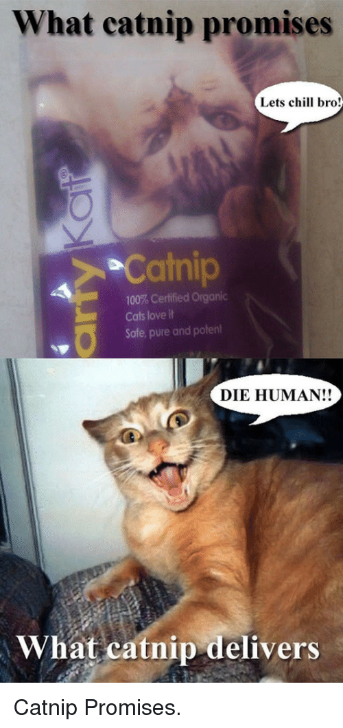 Chill Bro: What catnip promises  Lets chill bro!  Catnip  100% Certified Organic  Cats love it  Safe, pure and potent  DIE HUMAN!!  What catnip delivers <p>Catnip Promises.</p>