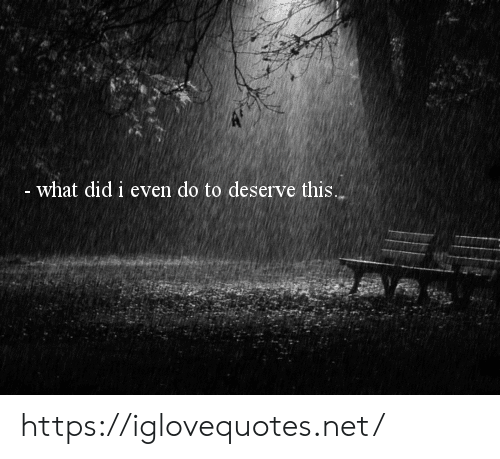 Net, Did, and What: -what did i even do to deserve this. https://iglovequotes.net/
