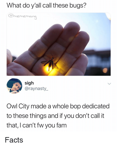 Facts, Dank Memes, and Owl City: What do y'all call these bugs?  @mememan  sigh  @raynasty_  Owl City made a whole bop dedicated  to these things and if you don't call it  that, I can't fw you fanm Facts