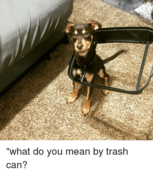 """Trash, Mean, and Can: """"what do you mean by trash can?"""