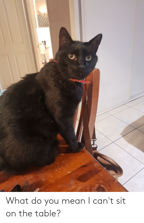 On The Table: What do you mean I can't sit on the table?
