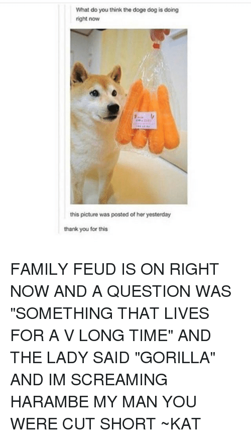 """doge dog: What do you think the doge dog is doing  right now  this picture was posted of her yesterday  thank you for this FAMILY FEUD IS ON RIGHT NOW AND A QUESTION WAS """"SOMETHING THAT LIVES FOR A V LONG TIME"""" AND THE LADY SAID """"GORILLA"""" AND IM SCREAMING HARAMBE MY MAN YOU WERE CUT SHORT ~KAT"""