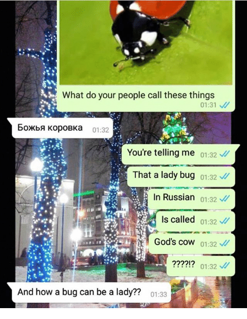 Ironic, Russian, and How: What do your people call these things  01:31  6oxbA KopoBKa 01:32  You're telling me 01:32  That a lady bug 01:32  In Russian 01:32  Is called 01:32  God's coW 01:32  ????!? 01:32  And how a bug can be a lady??  01:33