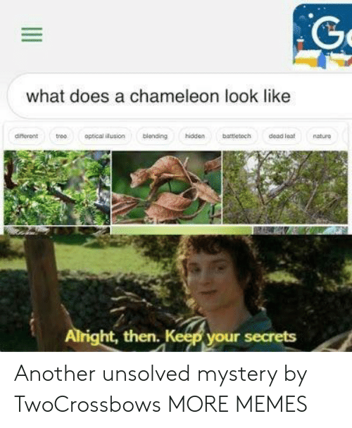 Dank, Memes, and Target: what does a chameleon look like  dinerent troo optical iusion blending hidden battletoch dead at nature  ht, then  your secrets Another unsolved mystery by TwoCrossbows MORE MEMES