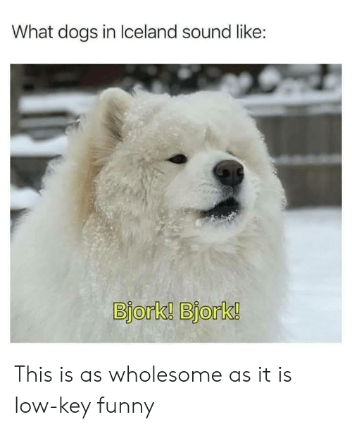 As It Is: What dogs in Iceland sound like:  Bjork! Bjork! This is as wholesome as it is low-key funny