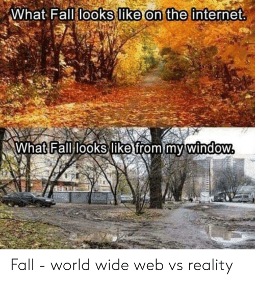 Fall, Internet, and World: What Fall looks like on the internet  What Fall looks like from my window Fall - world wide web vs reality