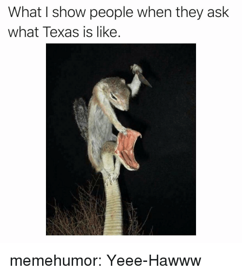 Tumblr, Blog, and Http: What I show people when they ask  what Texas is like. memehumor:  Yeee-Hawww