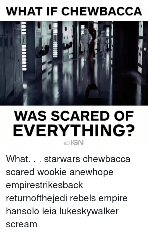 Wooki: WHAT IF CHEWBACCA  WAS SCARED OF  EVERYTHING?  IGN What. . . starwars chewbacca scared wookie anewhope empirestrikesback returnofthejedi rebels empire hansolo leia lukeskywalker scream