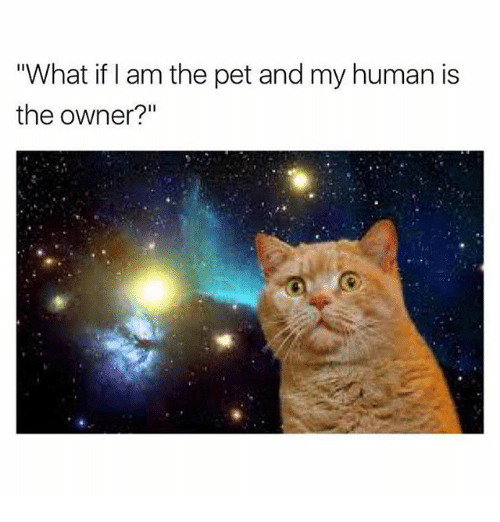 """Memes, 🤖, and Human: """"What if I am the pet and my human is  the owner?"""""""
