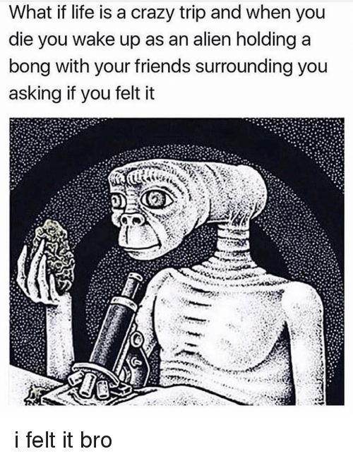 Crazy, Friends, and Life: What if life is a crazy trip and when you  die you wake up as an alien holding a  bong with your friends surrounding you  asking if you felt it i felt it bro