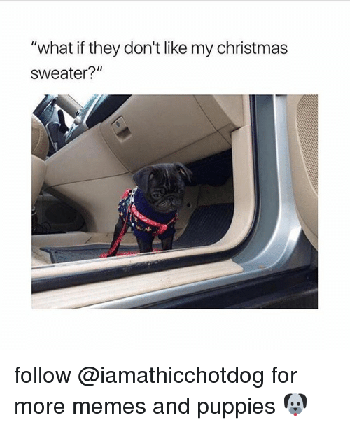 """Christmas, Memes, and Puppies: """"what if they don't like my christmas  sweater?"""" follow @iamathicchotdog for more memes and puppies 🐶"""