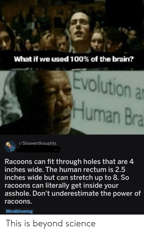Beyond Science: What if we used 100% of the brain?  olution ar  Human Bra  r/Showerthoughts  Racoons can fit through holes that are4  inches wide. The human rectum is 2.5  inches wide but can stretch up to 8. So  racoons can literally get inside your  asshole. Don't underestimate the power of  racoons.  Mindblowing This is beyond science