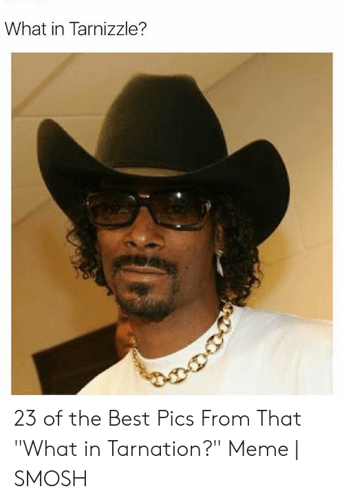 """Meme, Best, and Best Pics: What in Tarnizzle? 23 of the Best Pics From That """"What in Tarnation?"""" Meme 