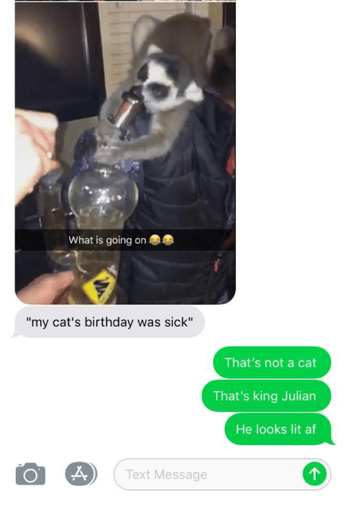 """Lit AF: What is going on  """"my cat's birthday was sick""""  That's not a cat  That's king Julian  He looks lit af  Text Message"""