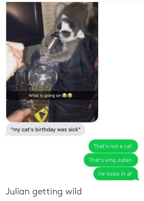 "julian: What is going on  ""my cat's birthday was sick""  That's not a cat  That's king Julian  He looks lit af Julian getting wild"