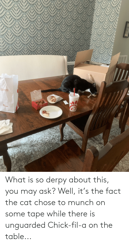 On The Table: What is so derpy about this, you may ask? Well, it's the fact the cat chose to munch on some tape while there is unguarded Chick-fil-a on the table...