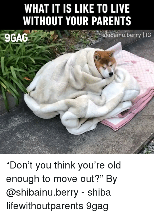 "Bai: WHAT IT IS LIKE TO LIVE  WITHOUT YOUR PARENTS  9GAG  bai  inu.berry |IG ""Don't you think you're old enough to move out?"" By @shibainu.berry - shiba lifewithoutparents 9gag"