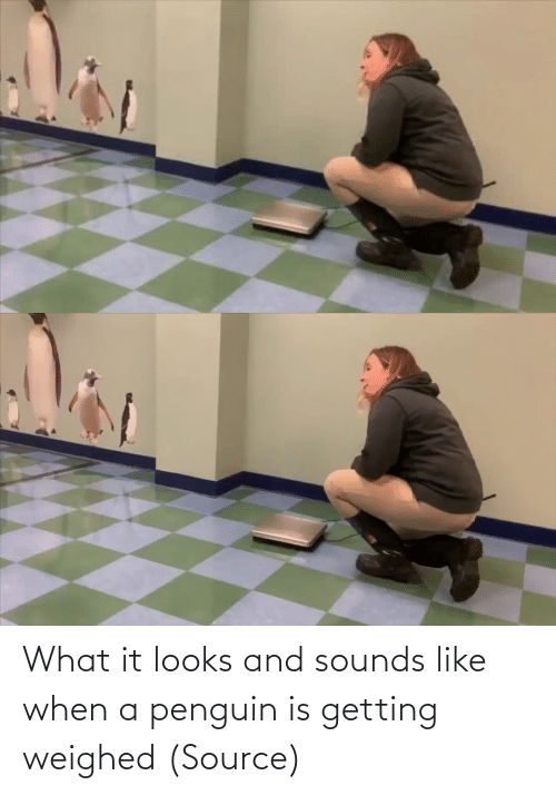 Penguin: What it looks and sounds like when a penguin is getting weighed (Source)