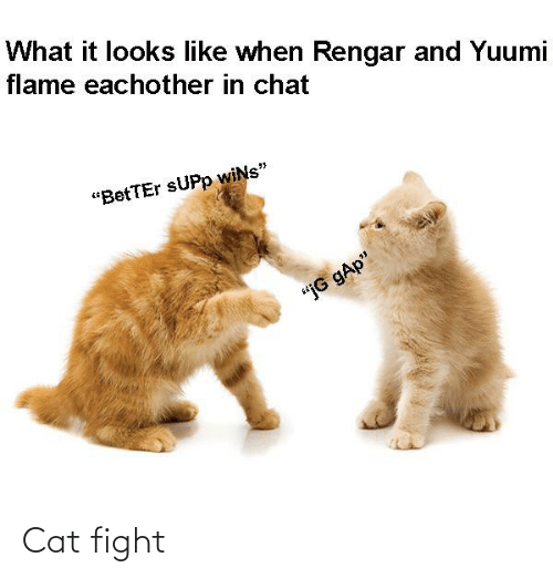 "cat fight: What it looks like when Rengar and Yuumi  flame eachother in chat  ""BetTEr SUPP wiNs""  ""jG gAp"" Cat fight"