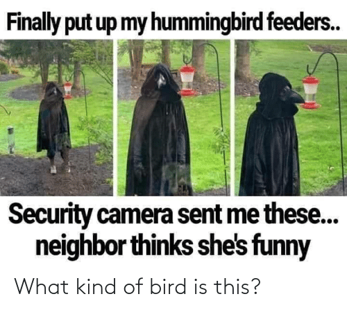 What Kind: What kind of bird is this?