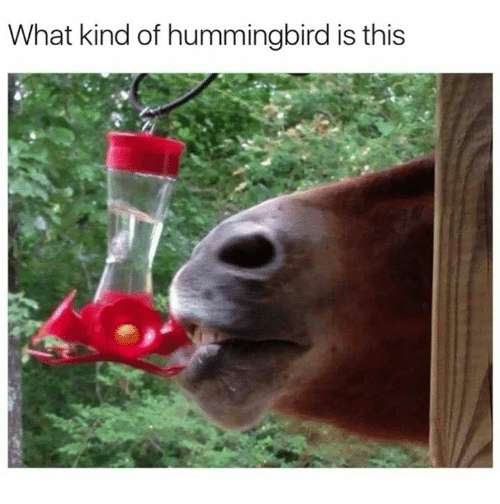 Hummingbirds: What kind of hummingbird is this