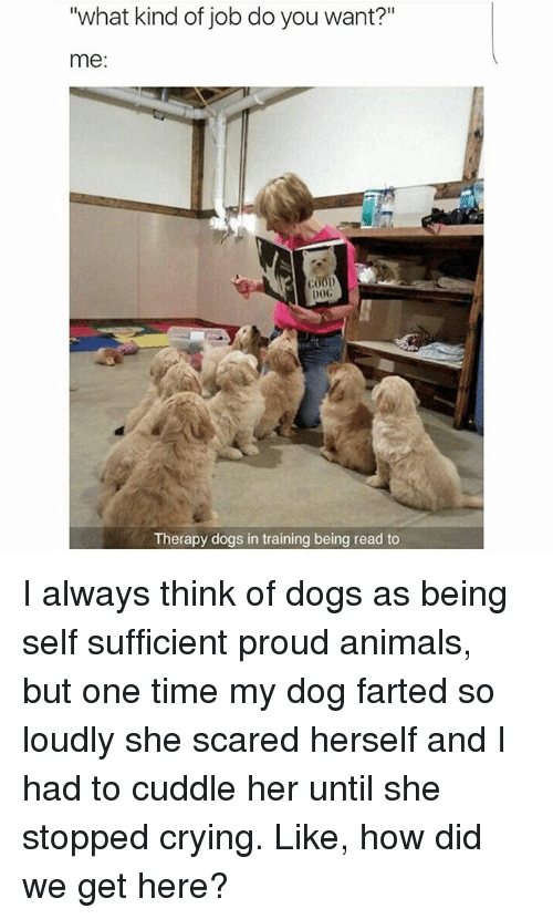 25 Best Memes About Dog Farting Dog Farting Memes