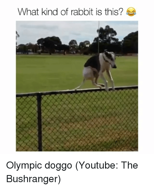 Funny, youtube.com, and Rabbit: What kind of rabbit is this? Olympic doggo (Youtube: The Bushranger)