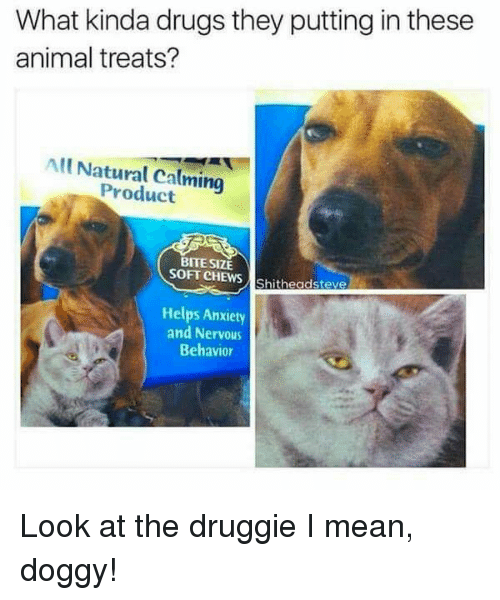 Drugs, Animal, and Anxiety: What kinda drugs they putting in these  animal treats?  All Natural Calming  Product  BITE SIZE  SOFT CHEWS Shitheadsteve  Helps Anxiety  and Nervous  Behavior Look at the druggie I mean, doggy!