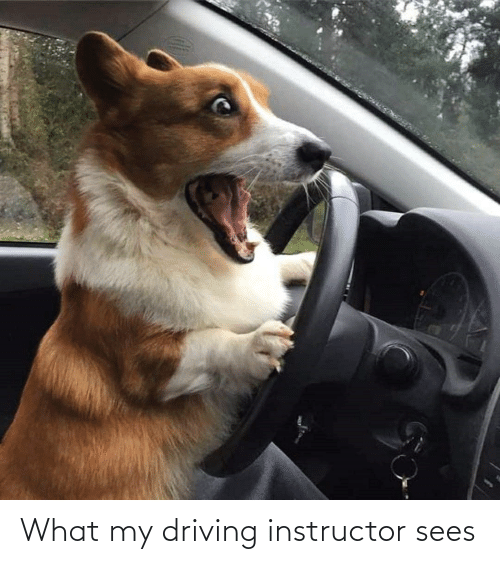 Aww Memes: What my driving instructor sees