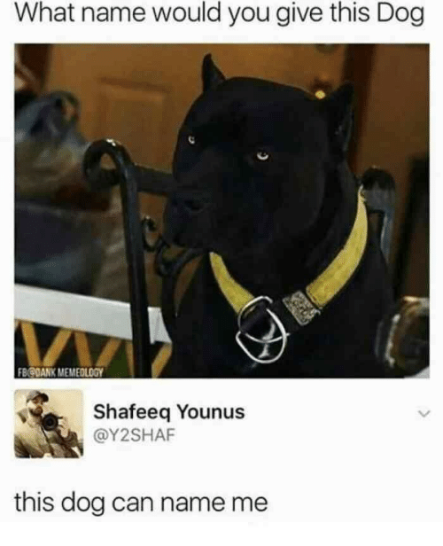 Dog, Can, and Name: What name would you give this Dog  FBODANK MEMEOLOGY  Shafeeq Younus  @Y2SHAF  this dog can name me