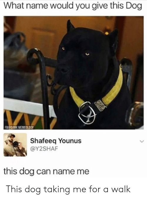 Dog, Can, and Mø: What name would you give this Dog  MA  Shafeeq Younus  @Y2SHAF  this dog can name me This dog taking me for a walk
