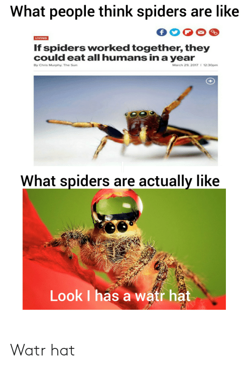 Chris: What people think spiders are like  LIVING  If spiders worked together, they  could eat all humans in a year  March 29, 2017 I 12:30pm  By Chris Murphy. The Sun  What spiders are actually like  Look I has a watr hat Watr hat