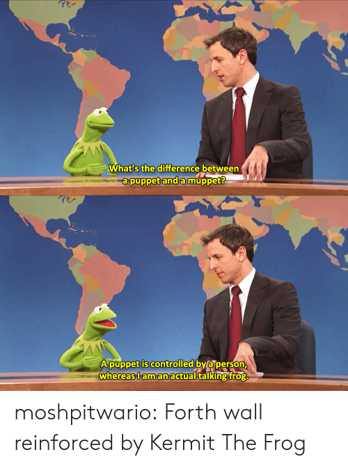 Kermit the Frog, Tumblr, and Blog: What s the difference between  a puppet and amuppet   A púppet is controlled by a person  whereas,l aman actual talking frog moshpitwario: Forth wall reinforced by Kermit The Frog