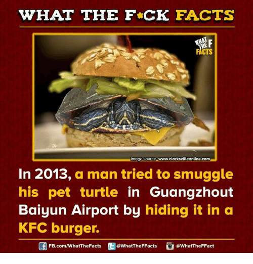 Turtling: WHAT THE FCK FACTS  FICTS  mage Source  www.clarksvilleonline.com  In 2013, a man tried to smuggle  his pet turtle  in Guangzhout  Baiyun Airport by hiding it in a  KFC burger.  Of FB.com/WhatThe Facts  @WhatTheFFacts  @WhatTheFFact