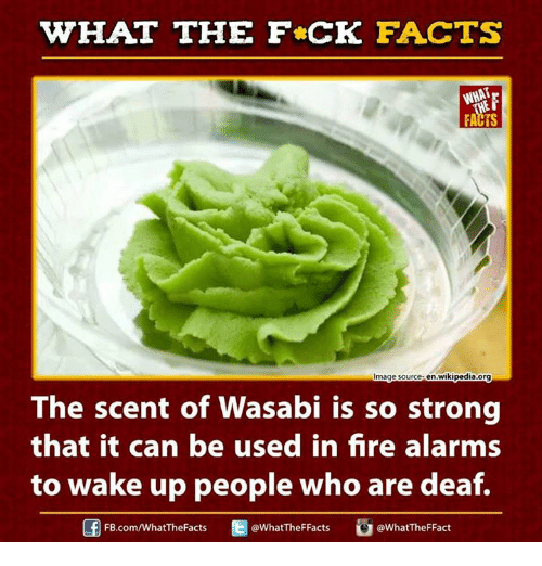 Ed, Edd N Eddy, Facts, and Fire: WHAT THE FCK FACTS  Image source en.wikipedia.org  The scent of Wasabi is so strong  that it can be used in fire alarms  to wake up people who are deaf.  Ed @WhatTheFFacts  FB.com/WhatThe Facts  @What TheF Fact