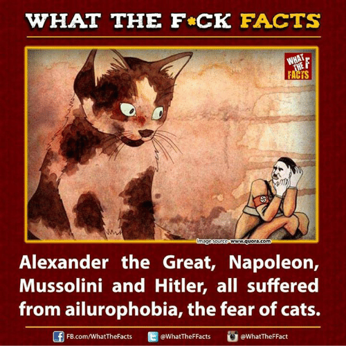 Alexander the Great: WHAT THE FCK FACTS  mage SO  wwwww&quora com  Alexander the Great, Napoleon,  Mussolini and Hitler, all suffered  from ailurophobia, the fear of cats.  @What The FFacts  @What The FFact  FB.com/WhatThe Facts