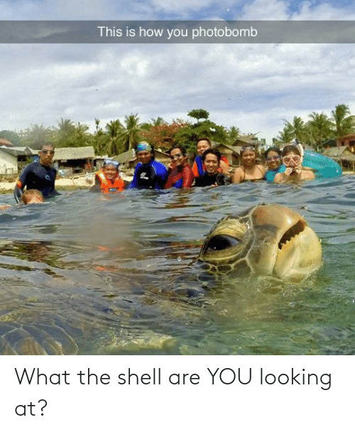 At: What the shell are YOU looking at?