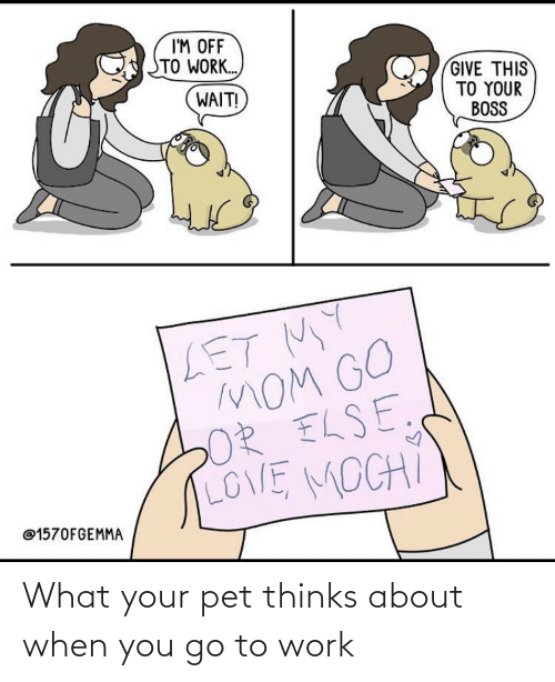 Thinks: What your pet thinks about when you go to work